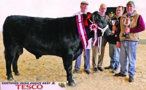MOYDRUM ECO STAR, Champion, March 2010 Sale, Kilkenny. Sire: Cardona Black Star. Pictured l–r: Michael Flanagan (breeder), Moydrum, Athlone, Derek Lovell (judge), David Holland (Leinster Irish Angus Club) and Oliver Flanagan (breeder).