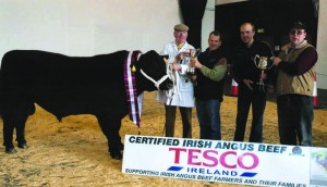 MOYDRUM CHICAGO, Champion, February 2008, Carrick-on-Shannon. Sire: Moydrum Ambassador. Exhibited by: Michael and Oliver Flanagan, Athlone, Co.Westmeath; Norman Little presenting the Irish Angus Perpetual Cup.
