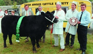 MOYDRUM LADY HEATHER 5th, All Ireland Champion 1996. Pictured l-r: Harry Emslie, Scotland (judge), Michael Foley (President, Irish Angus), Michael and Oliver Flanagan, Nigel Brady (AW Ennis, sponsors).