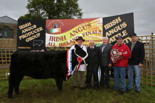 ALL IRELAND IRISH ANGUS SENIOR FEMALE CHAMPION Clooncolligan Fizz Sire: Ballyarden Bill Exhibited by: Michael & Oliver Flanagan, Moydrum, Athlone, Co. Westmeath. Left to Right: Michael Flanagan, Kevin Diffley Judge, John O'Hara ISA President, Oliver Flanagan and Cathal Sheridan A.W.Ennis Sponsor
